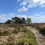 Activiteiten Drenthe, fietsen, wandelen, heide, bos, zwemmen.