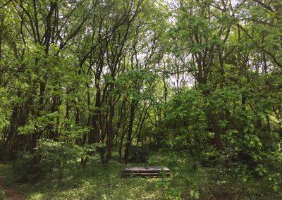 Vakantiehuis Drenthe | Buitenbed in het bos