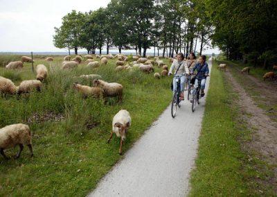 fiets4daagse
